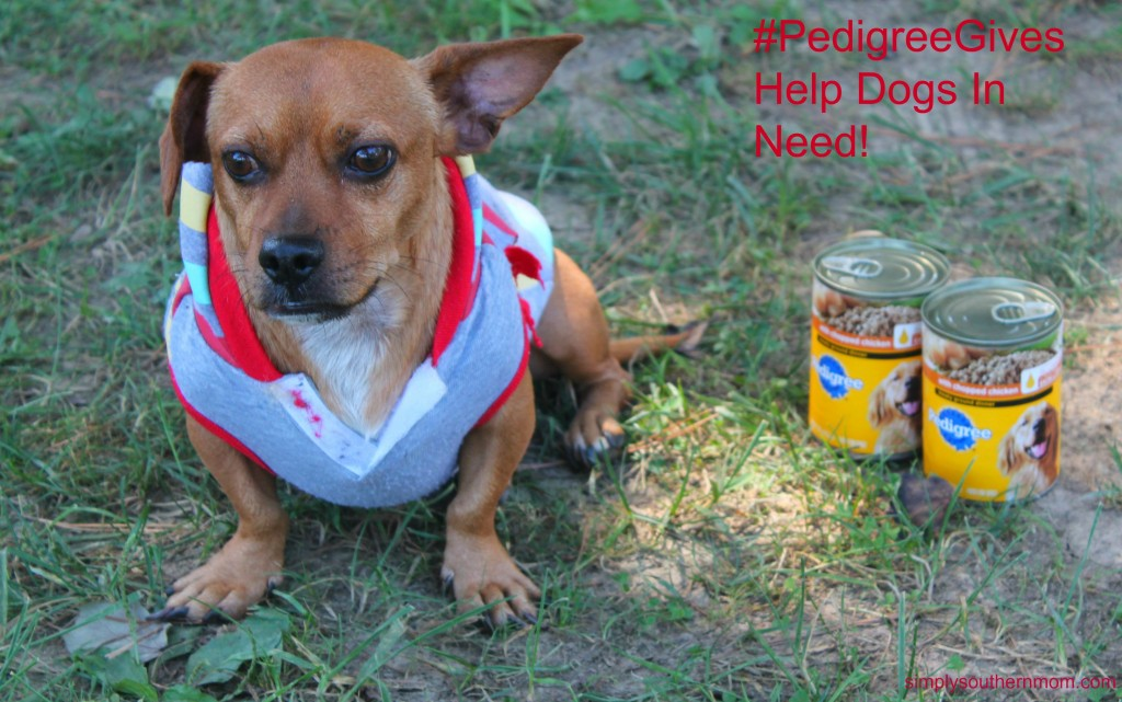 Rio and PedigreeGives