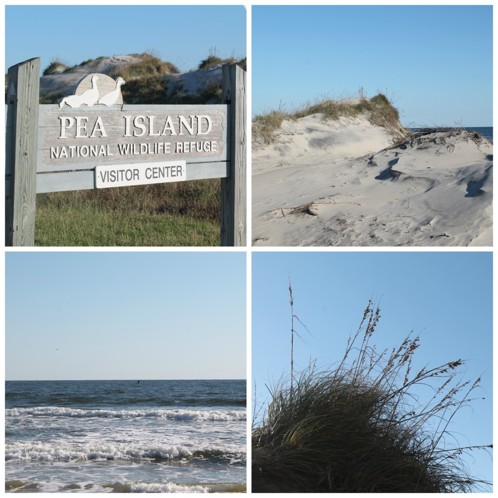Pea Island Collage