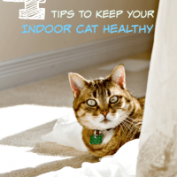 4-Tips-to-Keep-Your-Indoor-Cat-Healthy-compressor