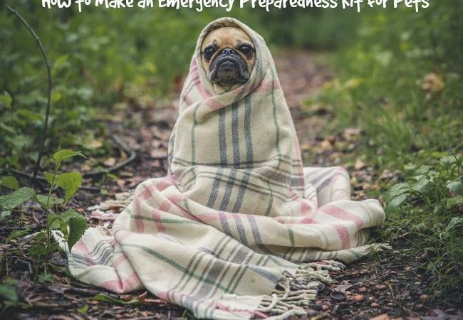 How to Make an Emergency Kit for Pets