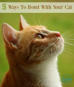 5 Tips to Bond with Your Cat + Giveaway