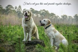 5 Tips To Keep Older Dogs Healthy
