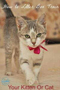 Litter Box Training Your Kitten or Cat +  Contest