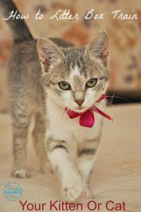 Litter Box Training Your Kitten or Cat