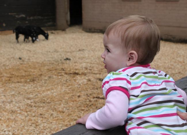 Petting Zoo Dillard House