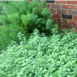 Common Mistakes New Gardeners Make