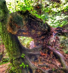 Dismals Canyon- Alabama's Secret Hiding Place