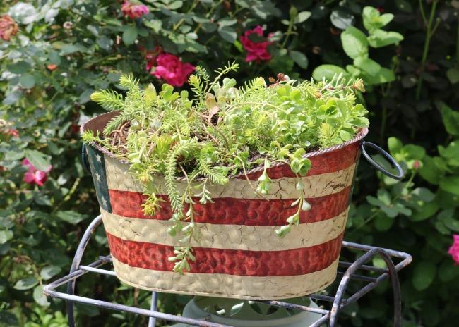 succulent patriotic container
