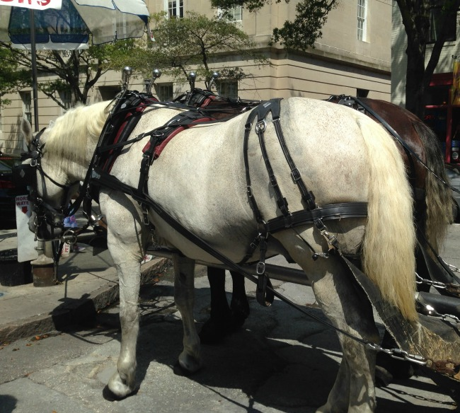Carriage Tours Old Wilmington