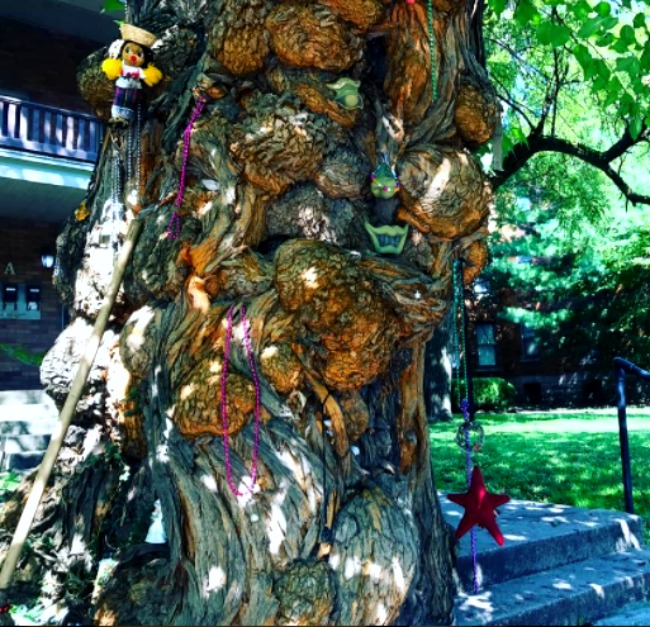 The Witches Tree where people still leave presents.